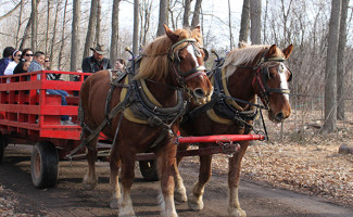 Bruce's Mill Maple Syrup Festiva