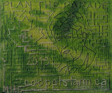 Coopers 2015 maze