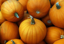 Pumpkins in York Region