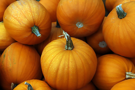 Pumpkins in York Region