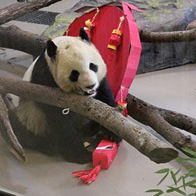 panda-pinata