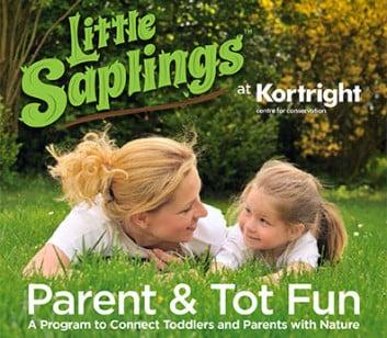 kortright-little-saplings