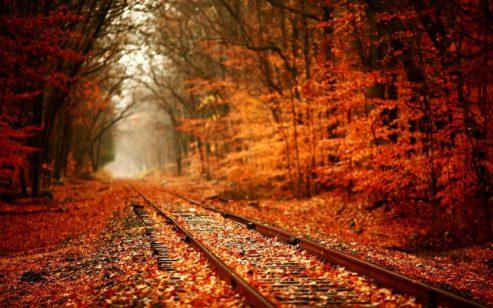 fall colours train ride
