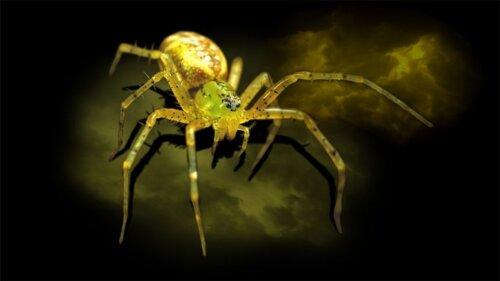 ROM Spiders Exhibit