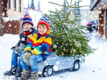 Christmas Tree Farms GTA