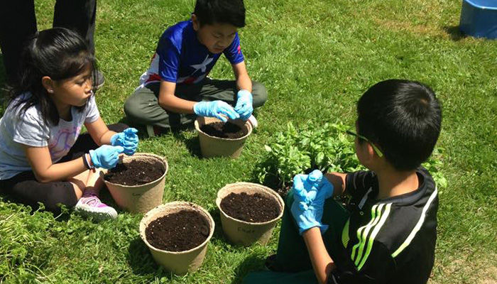 Whitchurch-Stouffville Museum Planting