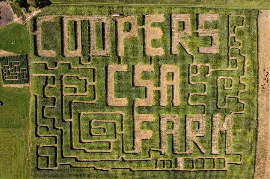 Coopers Farm Maze