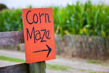 Corn Maze Ontario