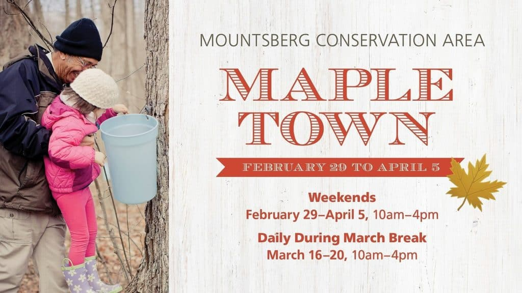 Mountsberg Maple Town