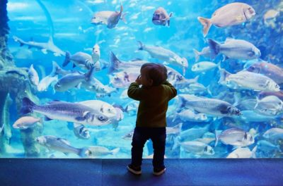 Visit a Virtual Aquarium