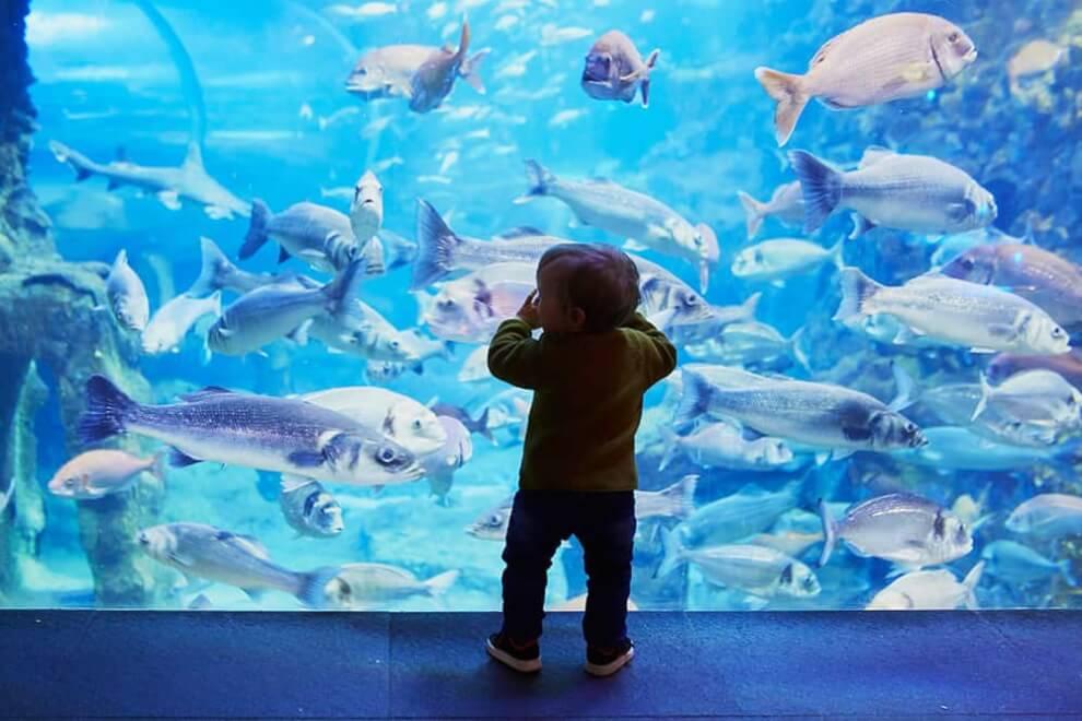 Visit a Virtual Aquarium