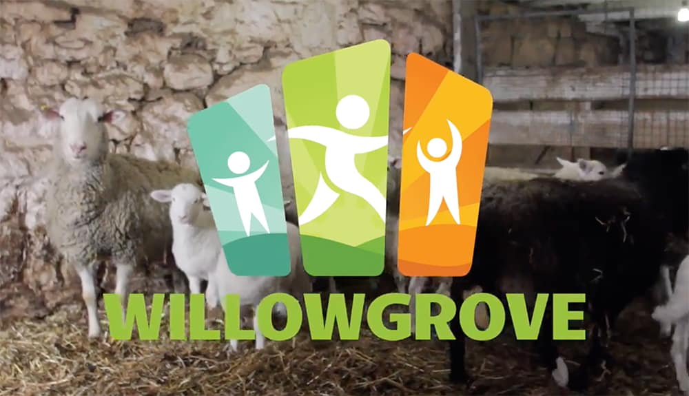 Willowgrove Camp at Home Activities