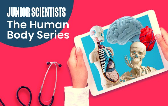 Junior Scientists: The Human Body Series