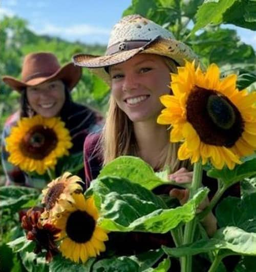 Rounds Ranch Sunflower Experience