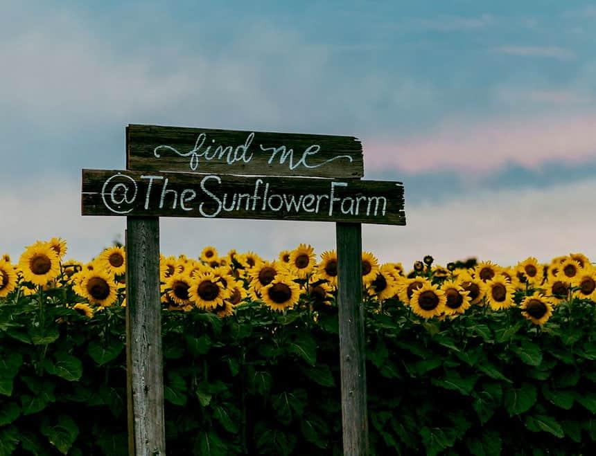 The Sunflower Farm in Beaverton