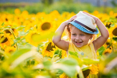 Top Sunflower Fields Ontario