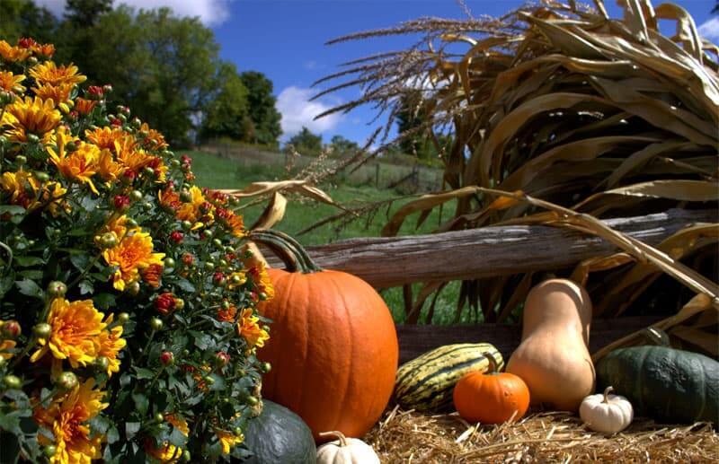 October Harvest Festival at Forsythe Farms