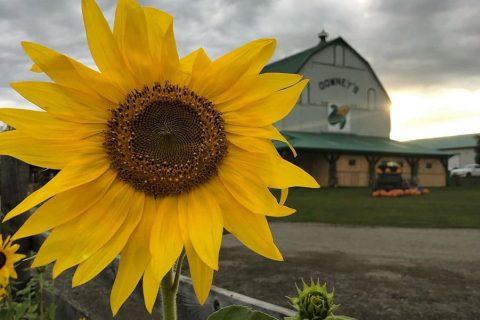 Downeys Fall Farm