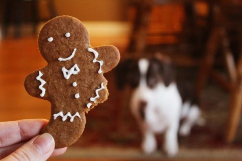 Gingerbread_blur-bread-close-up-906054
