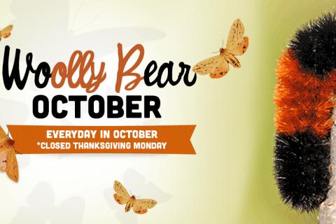 WOOLLY BEAR October